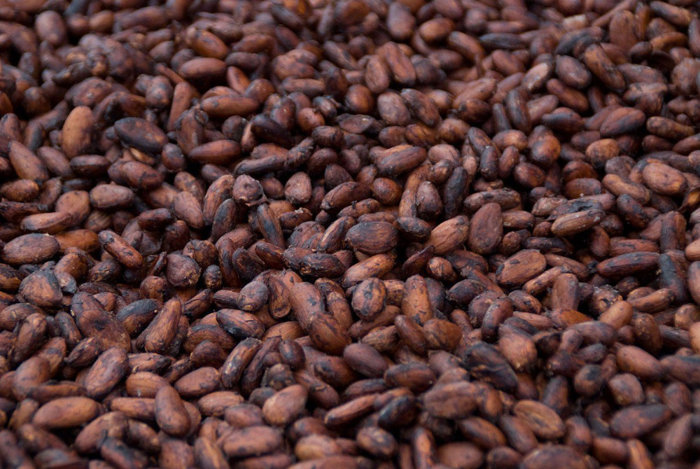 cacao beans raw